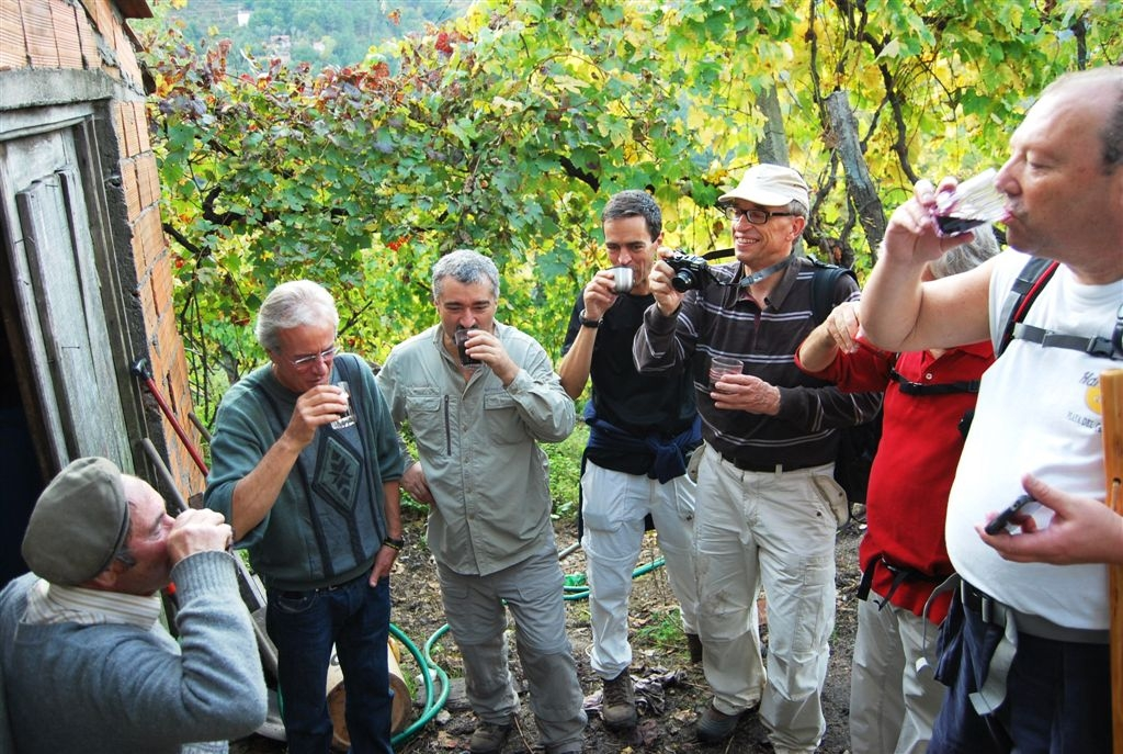 cam-castanhas-e-centeiros-27-10-2012-721