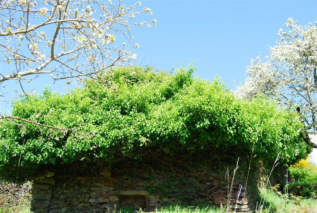 cam-miranda-corvo-11-maio-2013-978