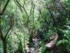 cam-miranda-corvo-11-maio-2013-622-85