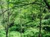 cam-miranda-corvo-11-maio-2013-908