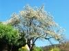 cam-miranda-corvo-11-maio-2013-981