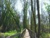 cam-ponte-de-lima-24-fev-2013-103