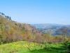 cam-sag-primavera-2013-00-149