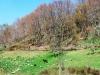 cam-sag-primavera-2013-00-437