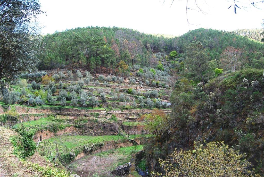 cam-benfeita-14-04-2012-1023