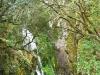 cam-benfeita-14-04-2012-875