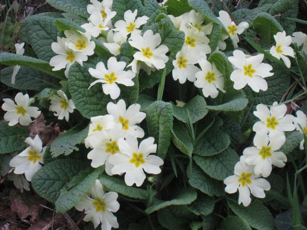 Sagração da Primavera